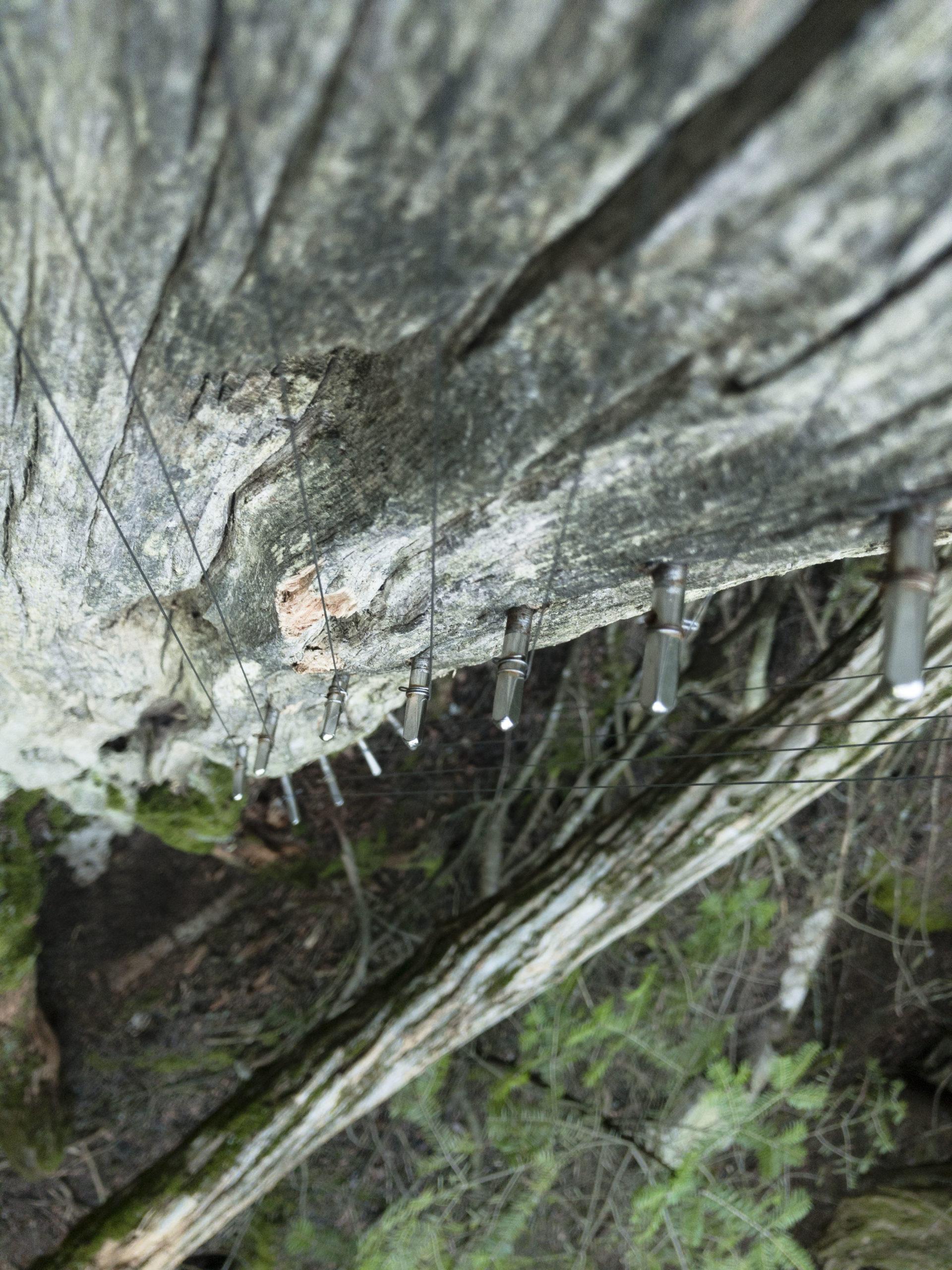 apynelis5 tree harp