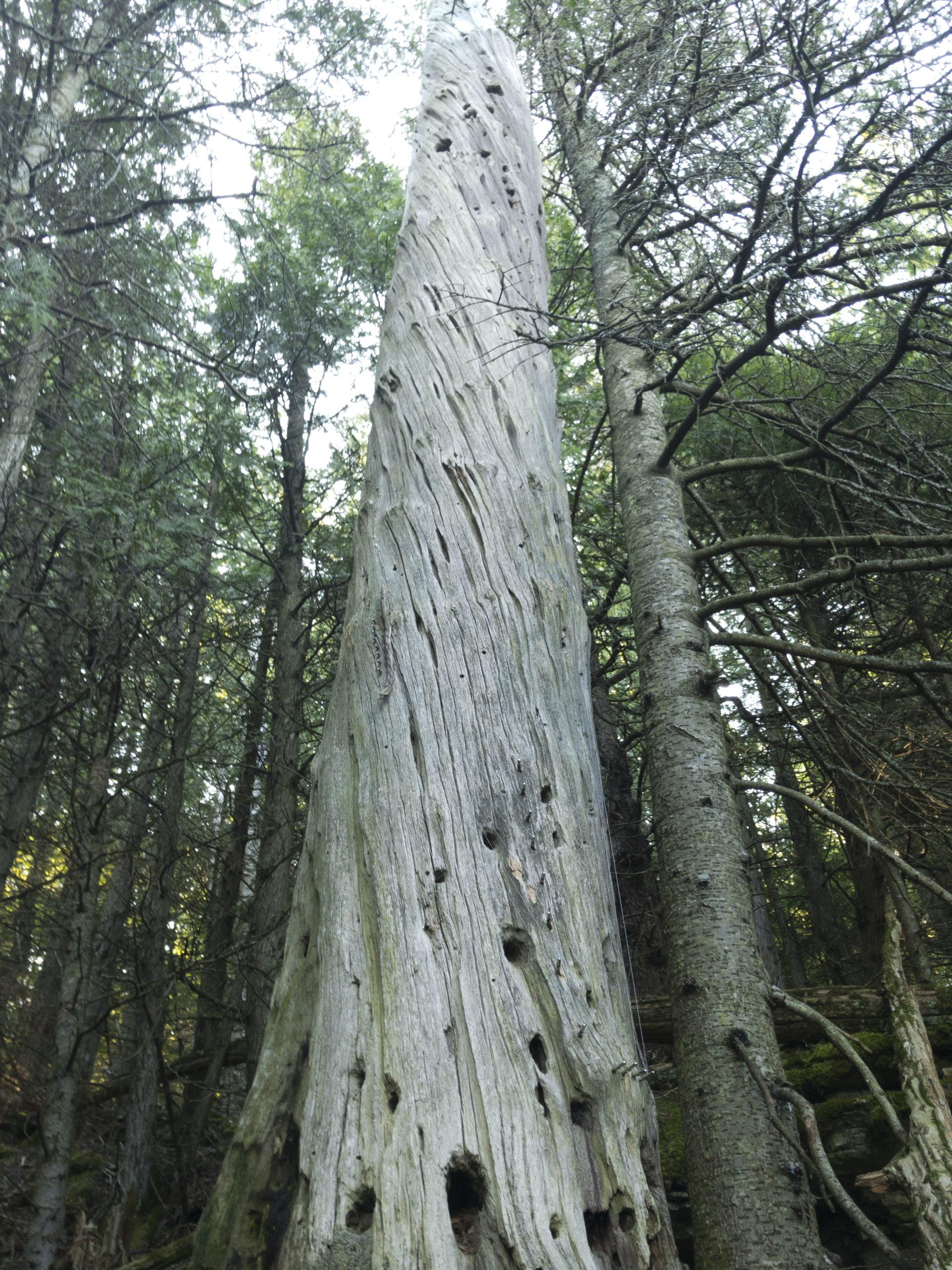 apynelis8 tree harp