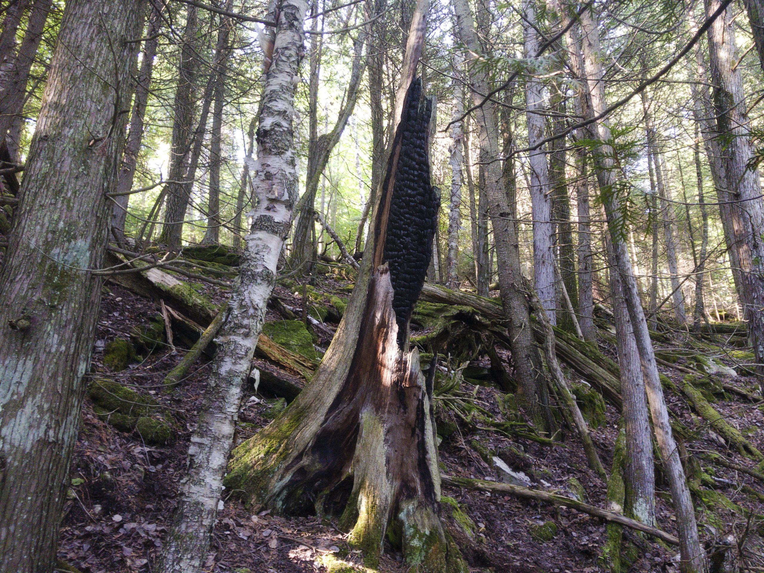 scenery treeharp morning1