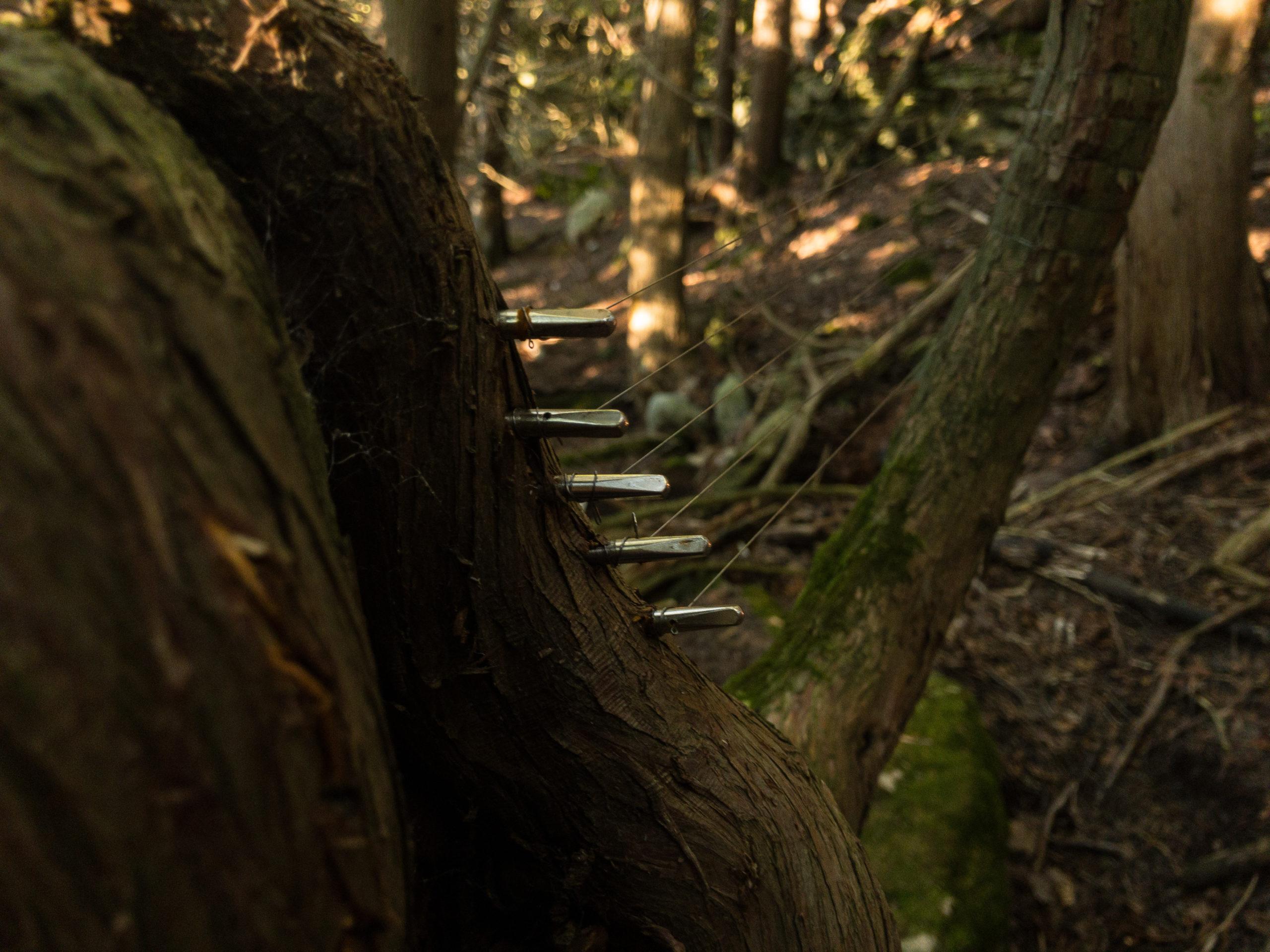 tree harp gegute sode11